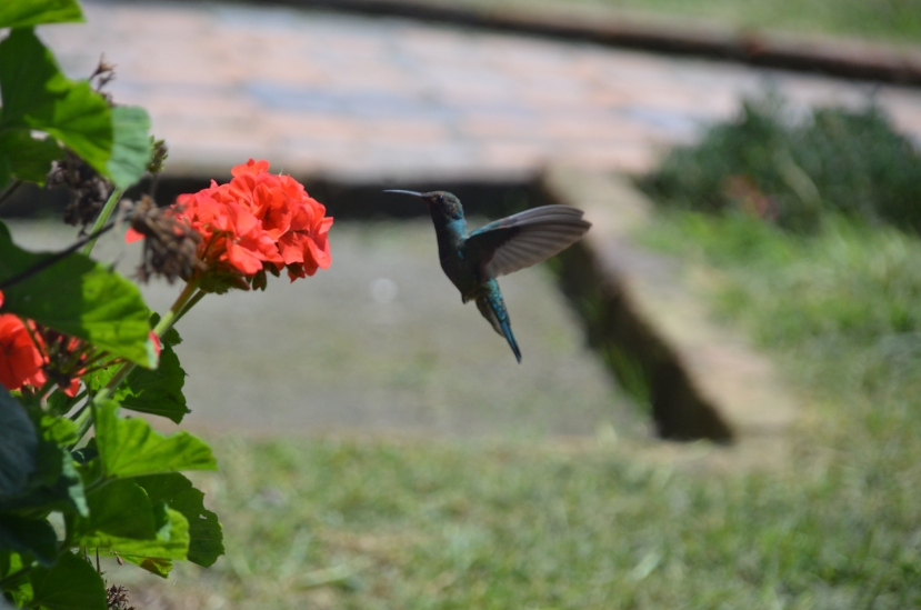 The Happy Hummingbird