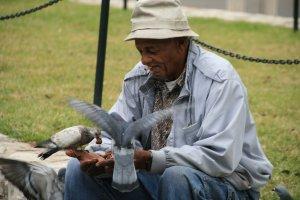 Pigeons Need Love, Too
